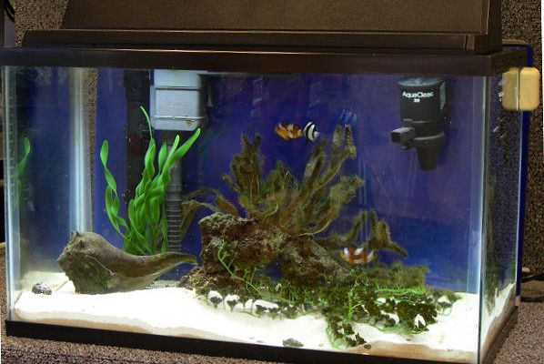 Having a saltwater aquarium does not have to cost an arm and a leg.