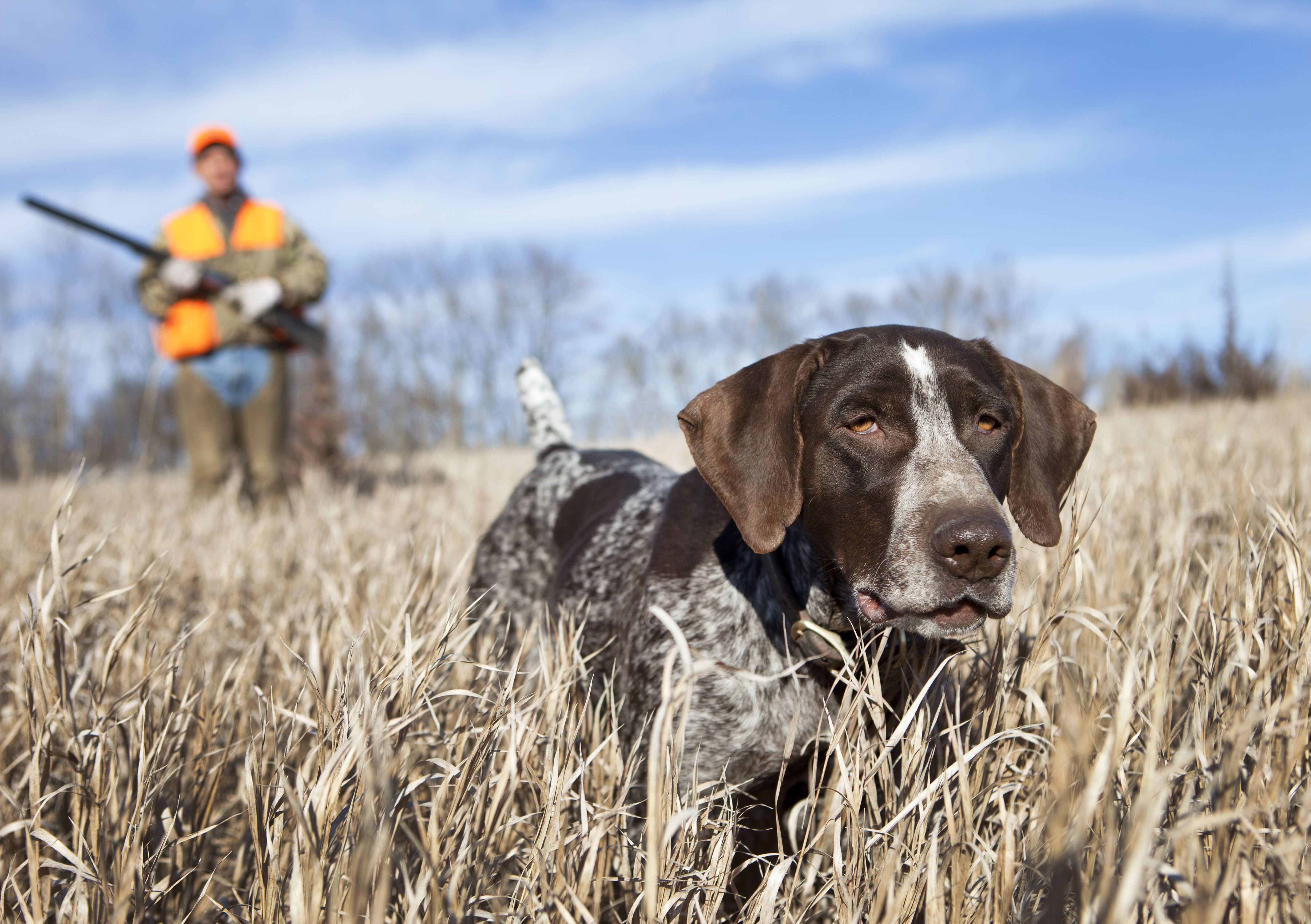 10 Breeds That Make the Best Hunting Dogs