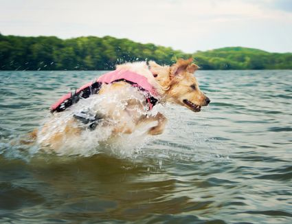 Dog in life jacket jumping up