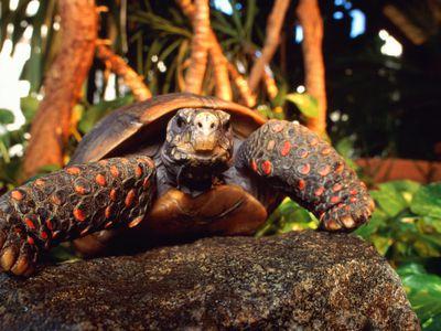 Turtle and Tortoise Shells