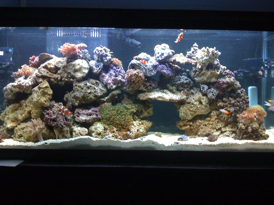 55-gallon reef tank