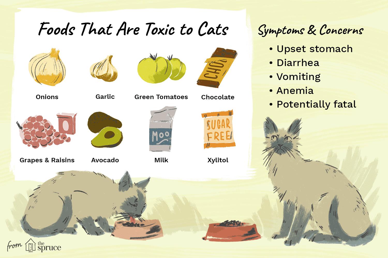 Ilustración de alimentos que son tóxicos para los gatos.