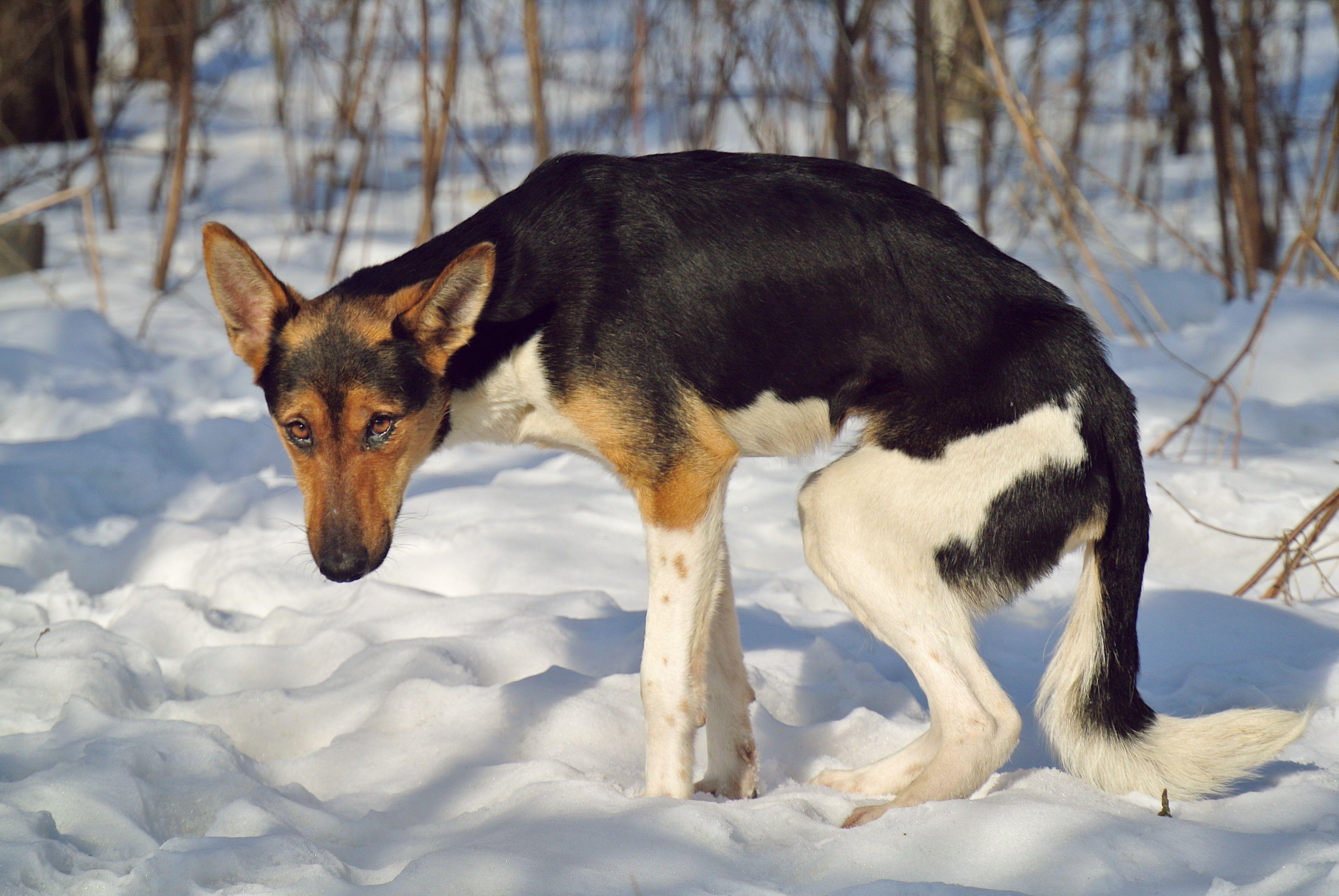 Perro flaco en invierno