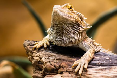 Do Reptiles Needs Pet Sitters?