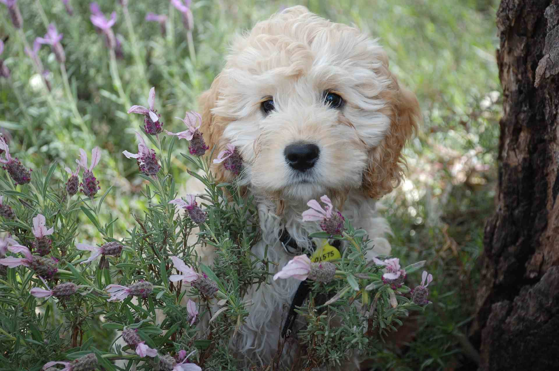 Small dog sitting in flowers