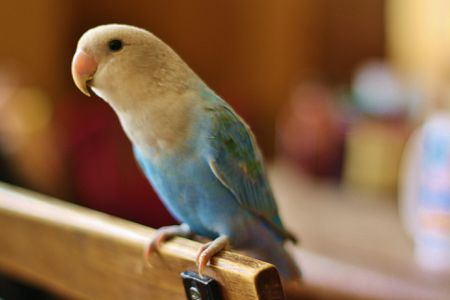 What To Do if Your Bird Is Sick