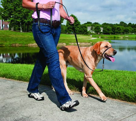 Gentle Leader Head Collar For Dogs Review