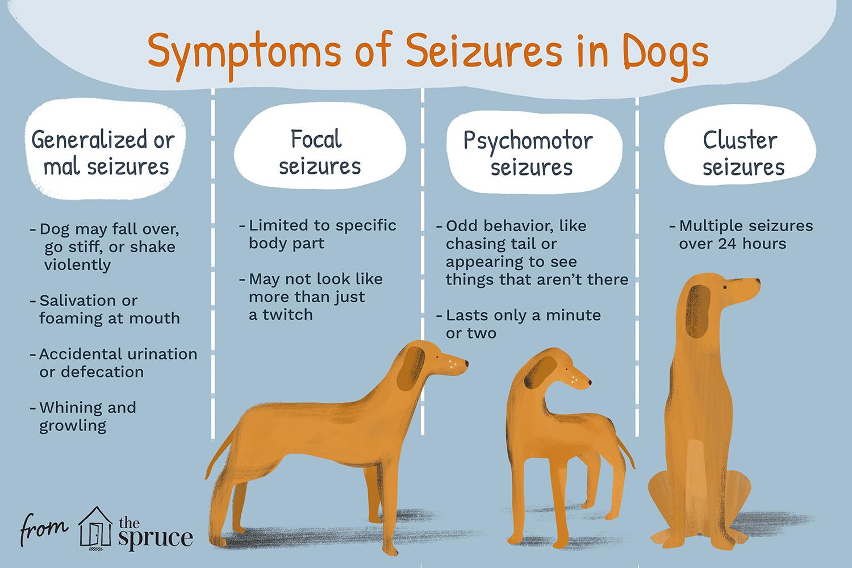síntomas de convulsiones en perros