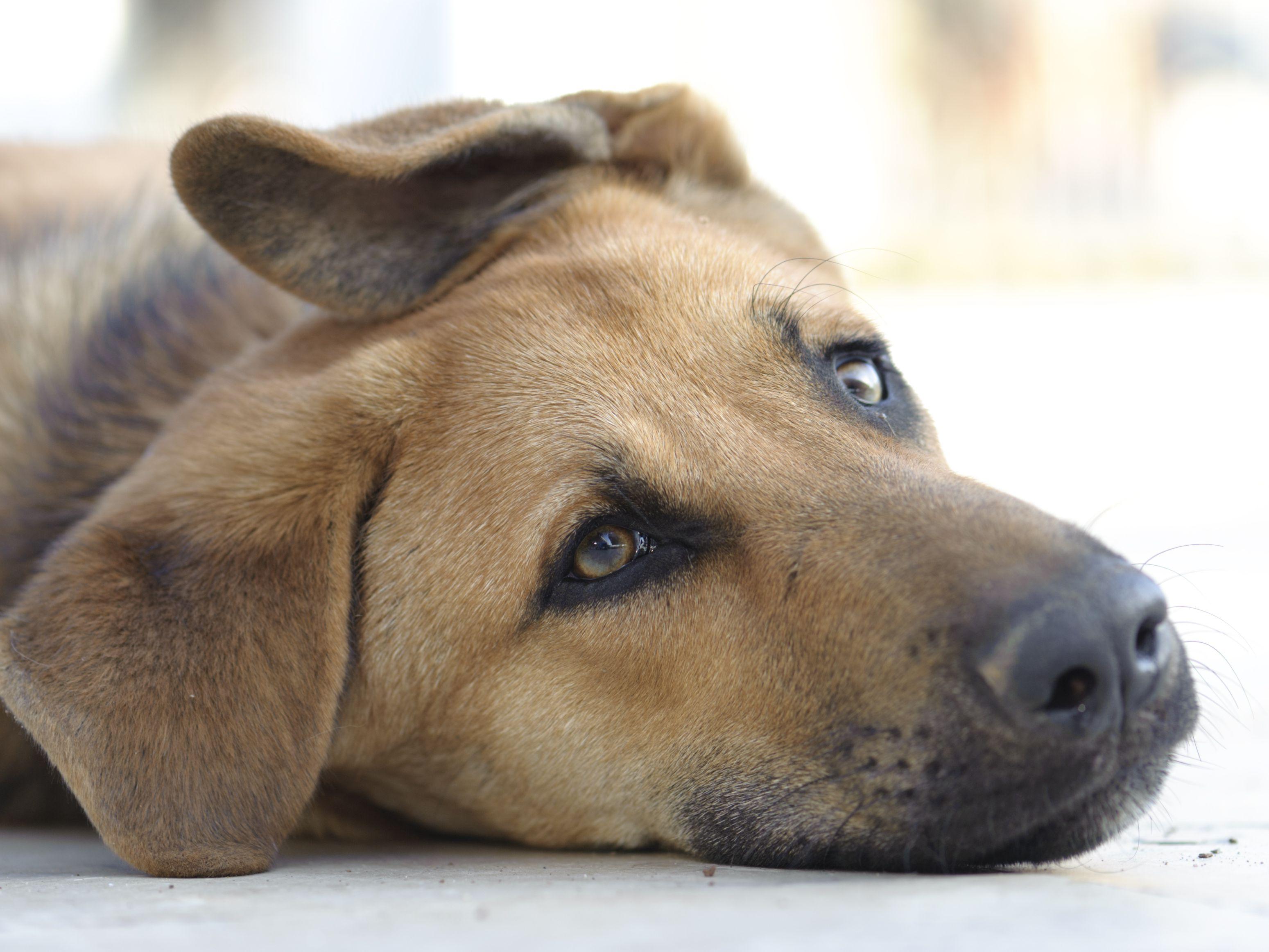 My Pet Is Sick, and I Can't Afford to Go to the Vet