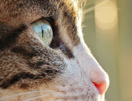 Cat profile close-up.