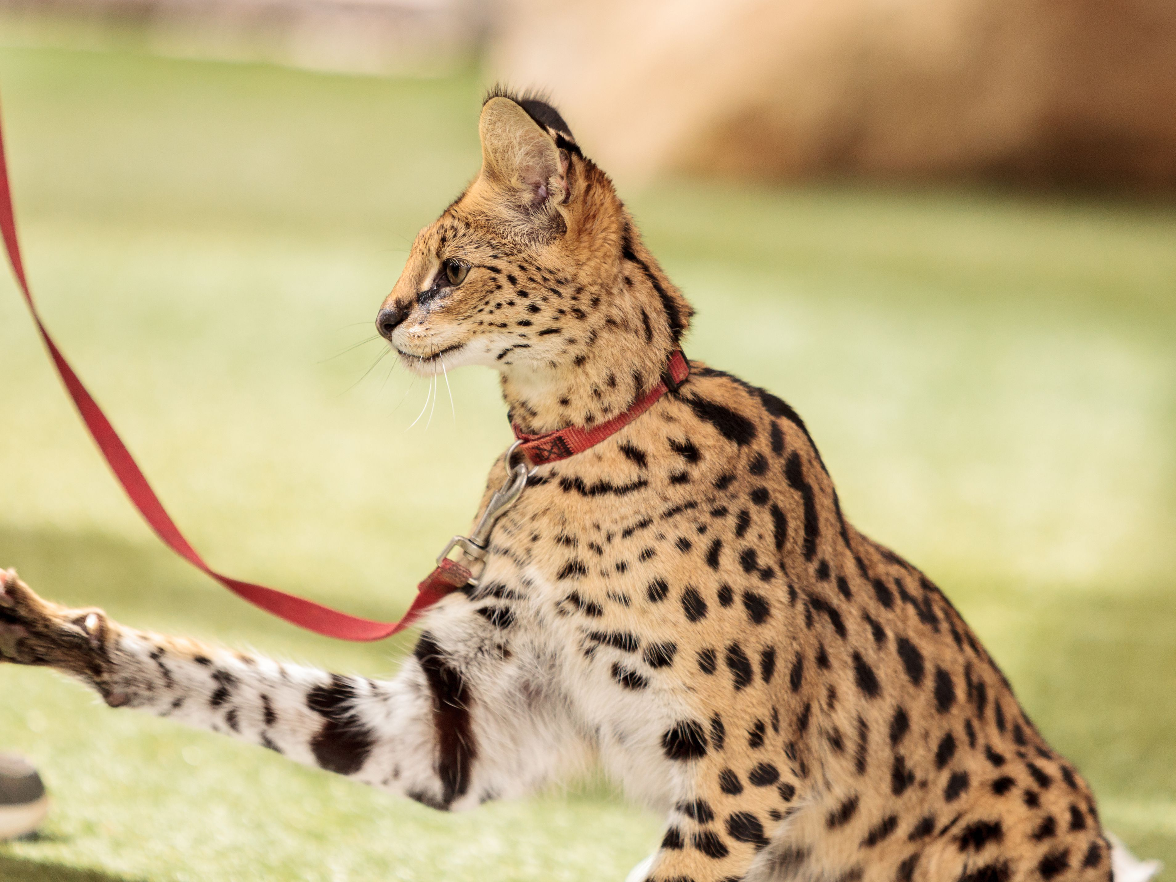 Laws on Exotic Pets for Each U.S. State