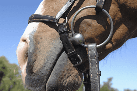 How Snaffle Bits Work on a Horse