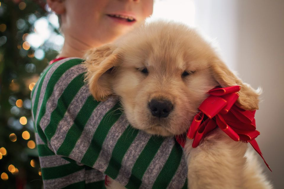 Boy hugging golden retriever puppy dog wearing a bow