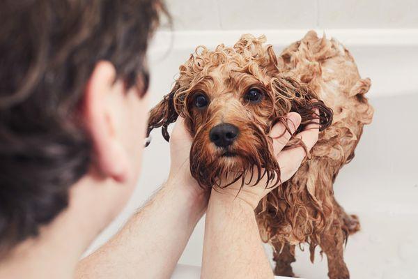 Man giving his pet dog a bath