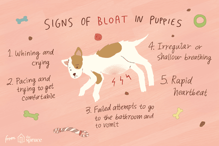 Treating Bloat In Puppies