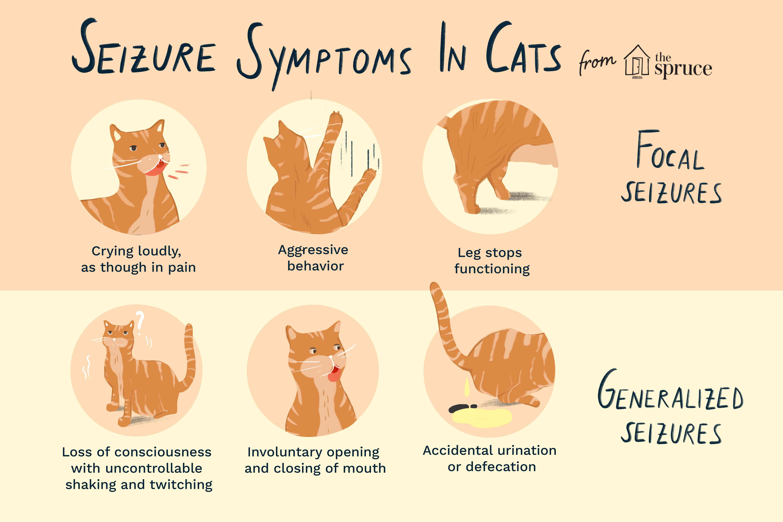 síntomas de convulsiones en gatos ilustración