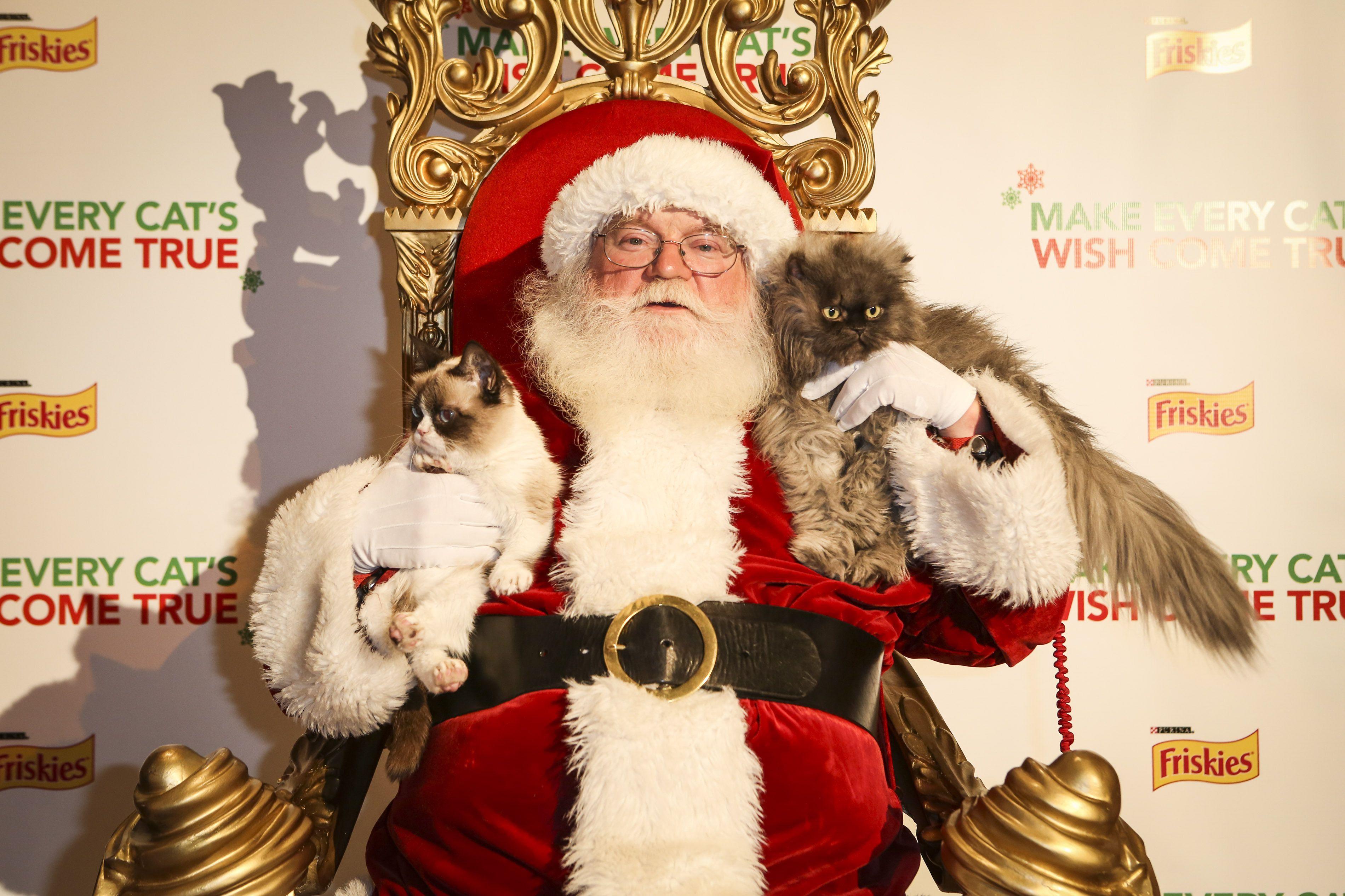 Grumpy cat posing with Santa