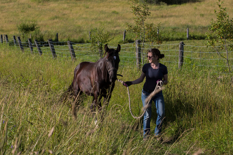 Woman walking horse on grassy field