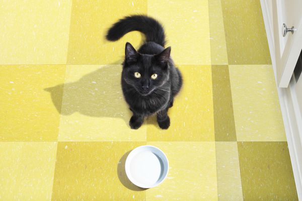 Young black cat waits to be fed.