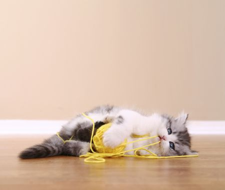 a981c25e What to Do If Your Cat Has Swallowed a String