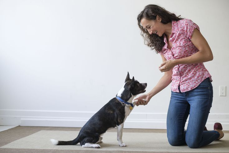 How to DIY Obedience Train Your Dog