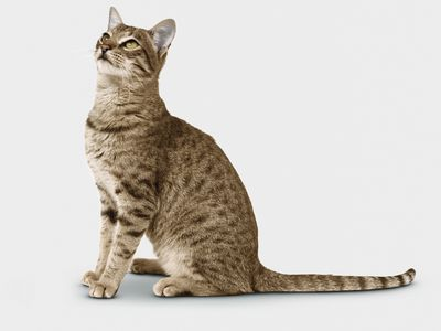 signs your cat is healthy upper body