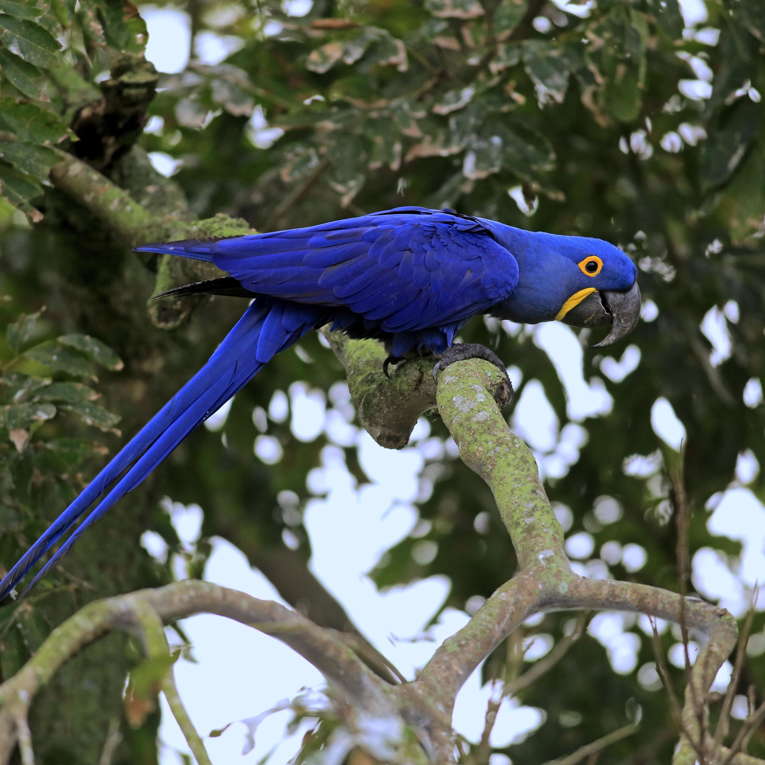 5 Fun Facts About the Macaws