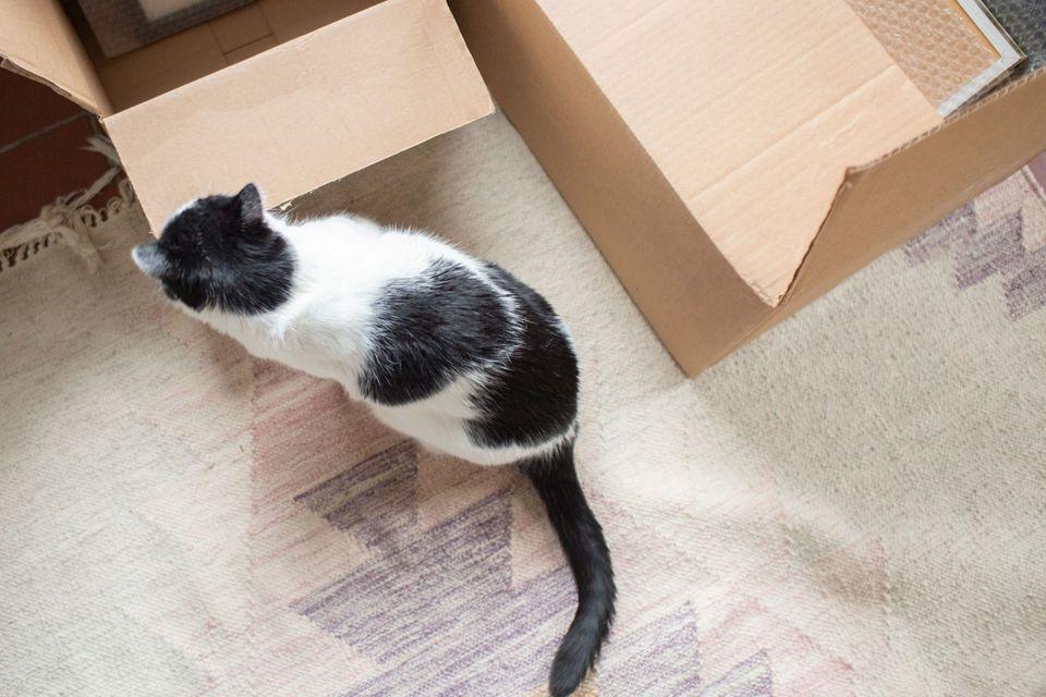 un movimiento puede ser estresante para un gato