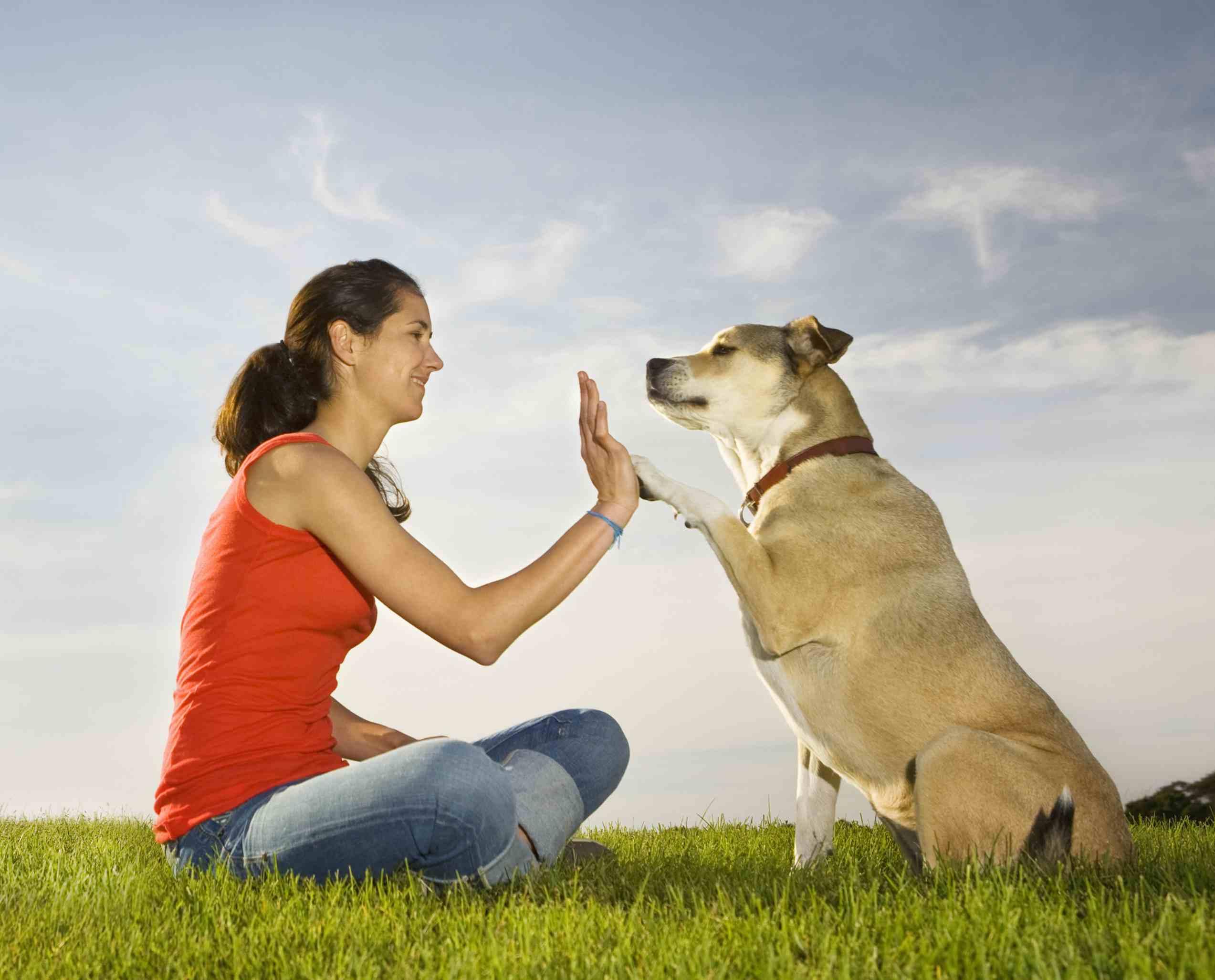 perro y dueño haciendo chocar los cinco