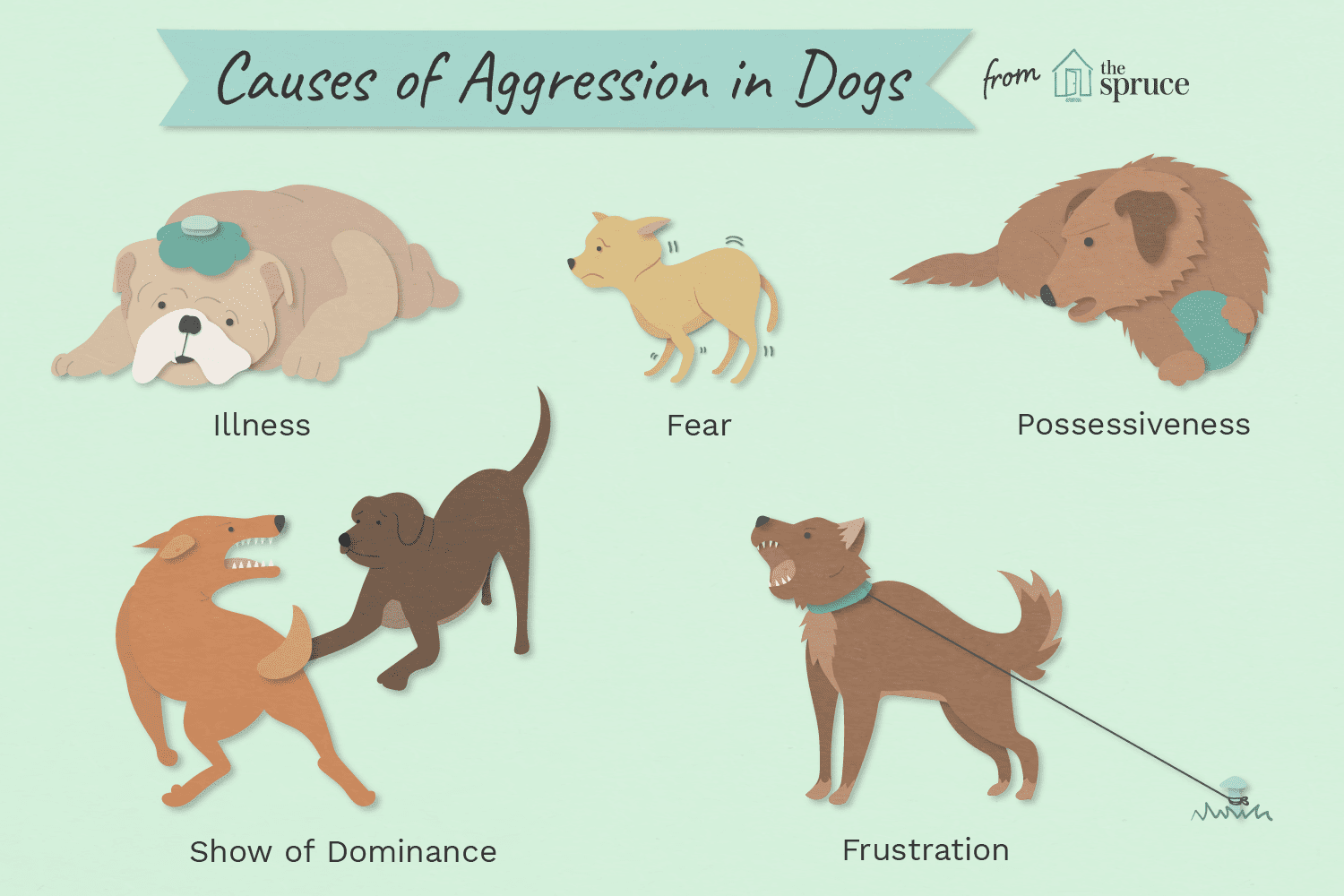 Dogs Get Aggressive And How To Stop