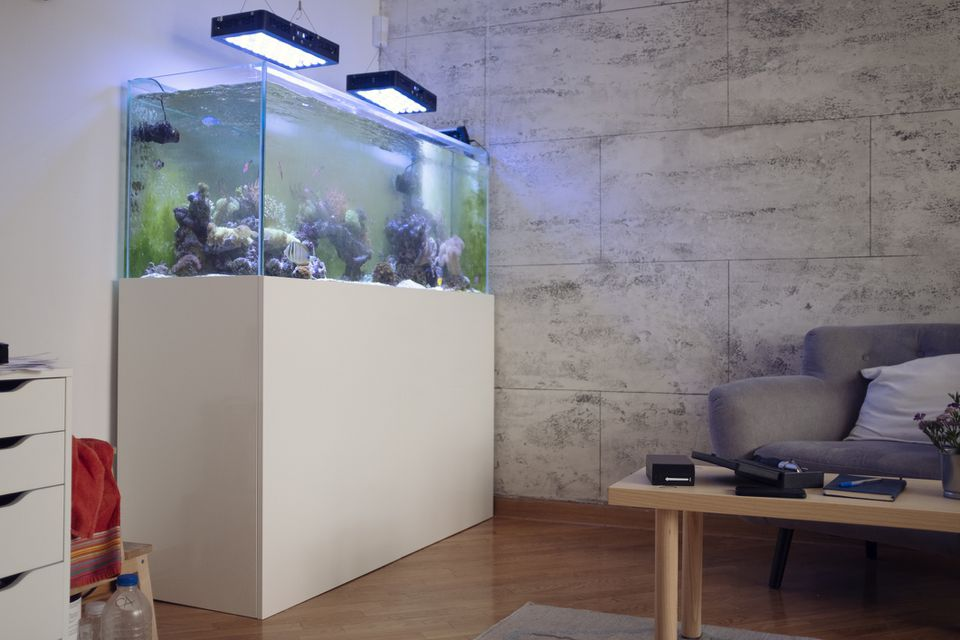 home aquarium in a modern home