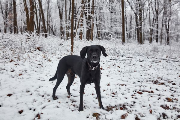 a dog in the snow