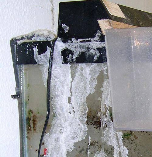 A Nasty Case of Aquarium Salt Creep Build Up