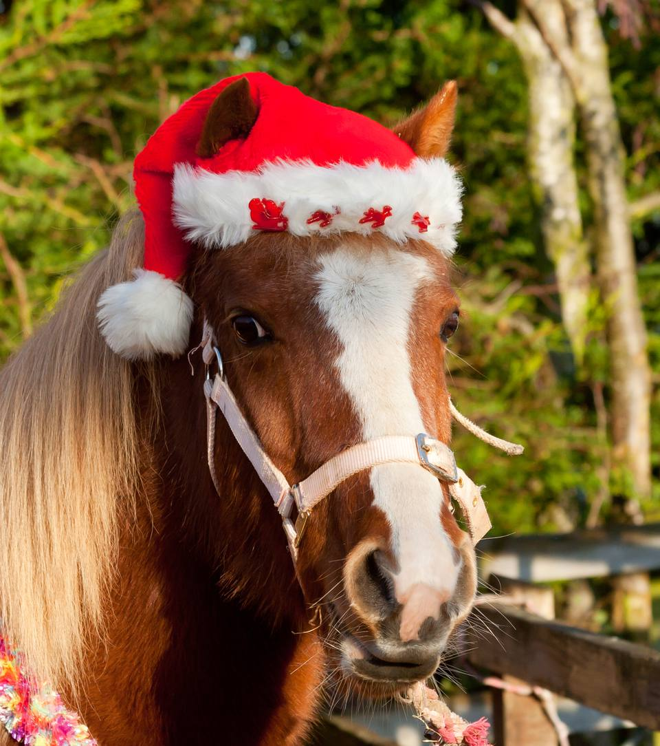 Pretty pony in Santa hat for Christmas
