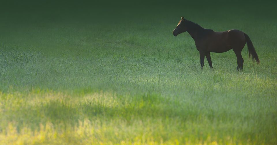 Horse in a lush green pasture