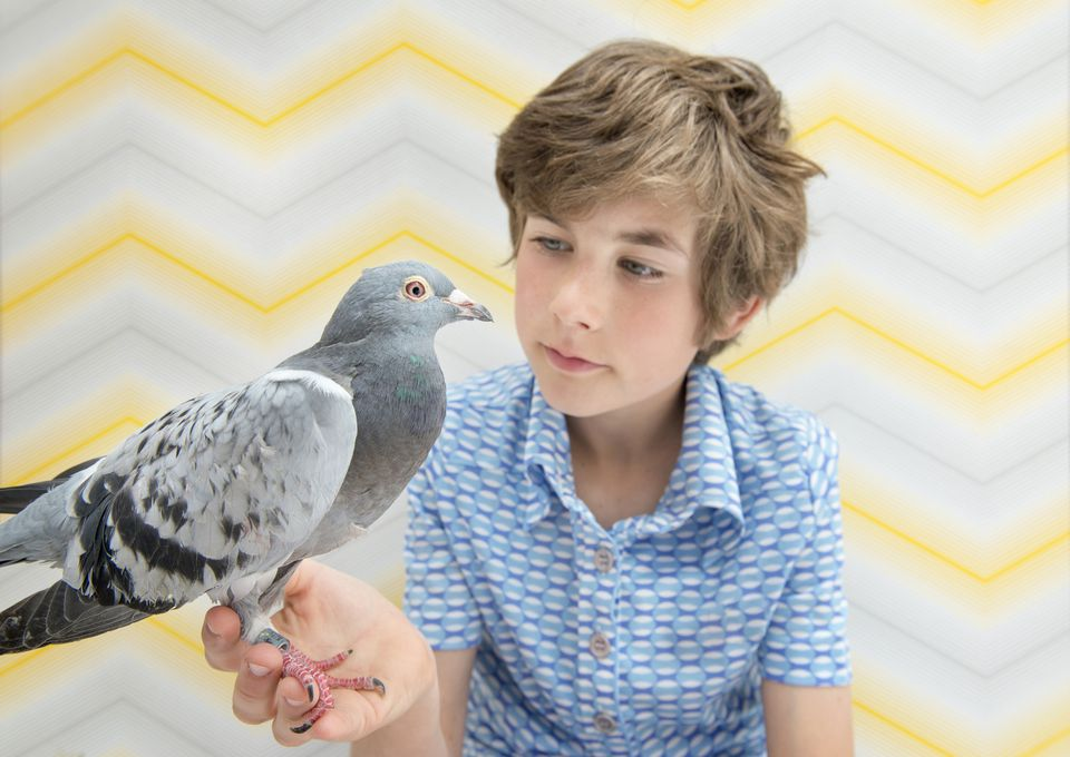 Pigeon in boy's hand