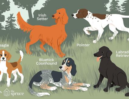 Best hunting dogs illustration