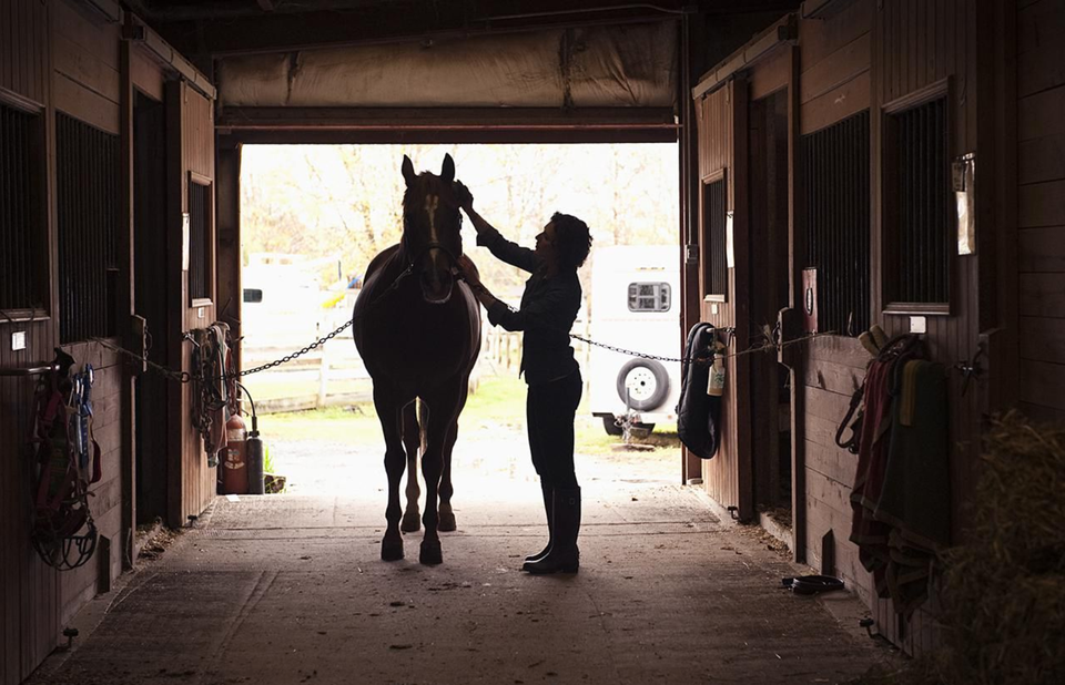 woman grooming a horse
