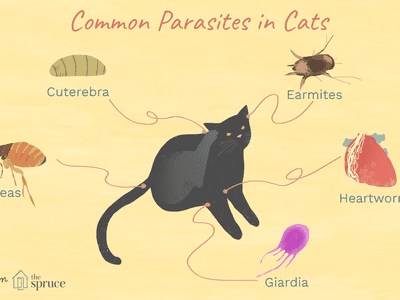 Worms In Cat Feces