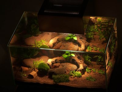How To Manually Generate Oxygen In Aquariums