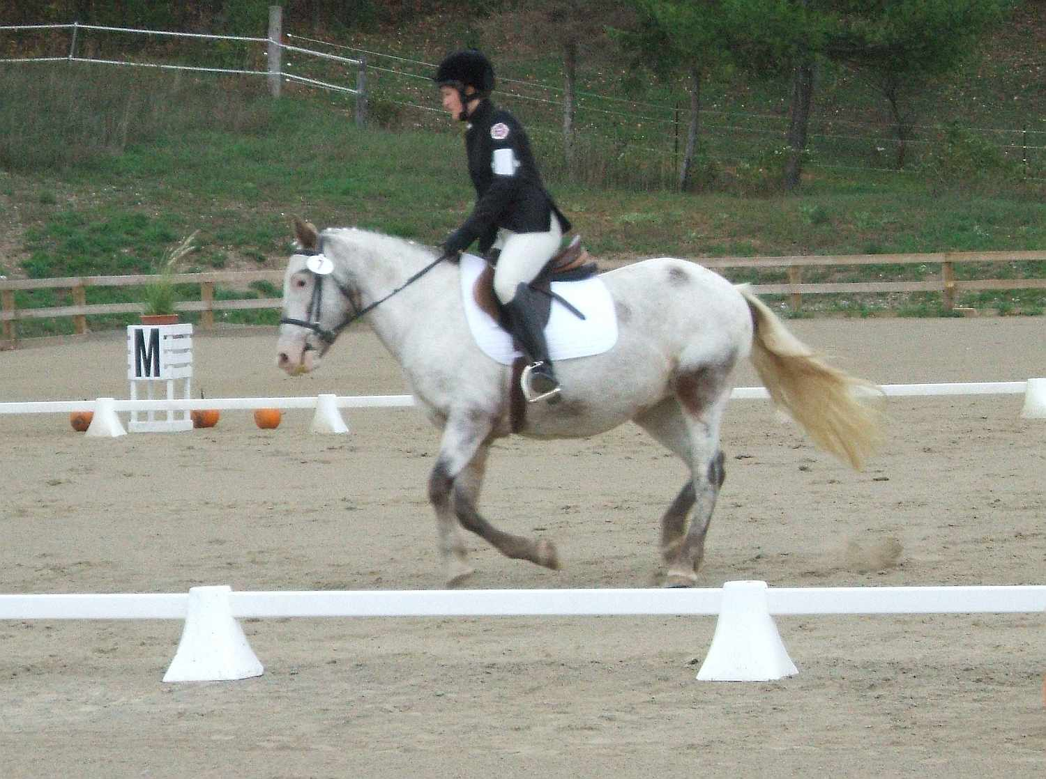 Pony Club dressage rider.