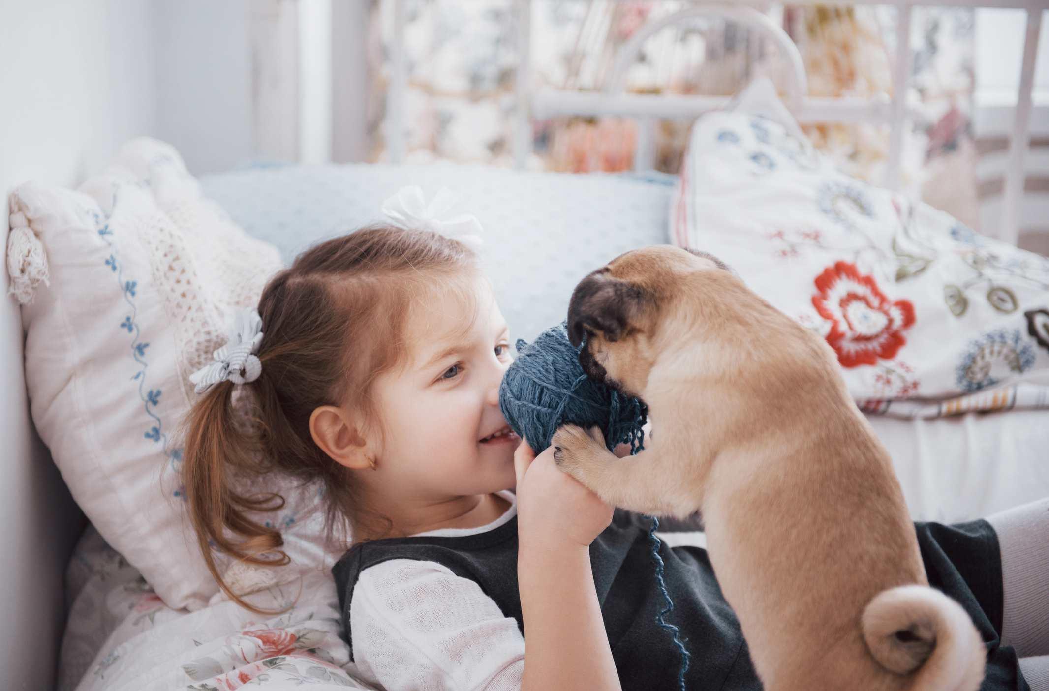 Young girl playing with pug