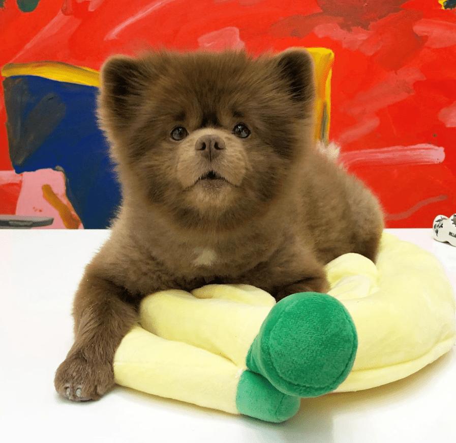 Bertram sentado encima de los juguetes