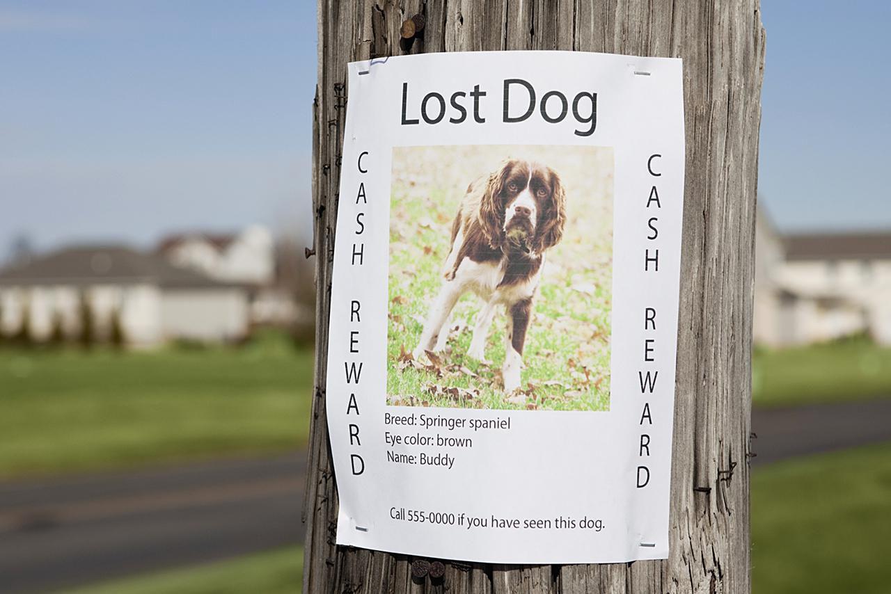 Lost dog post