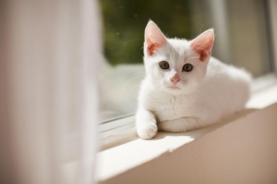 El gatito de 6.5 semanas está alerta y activo