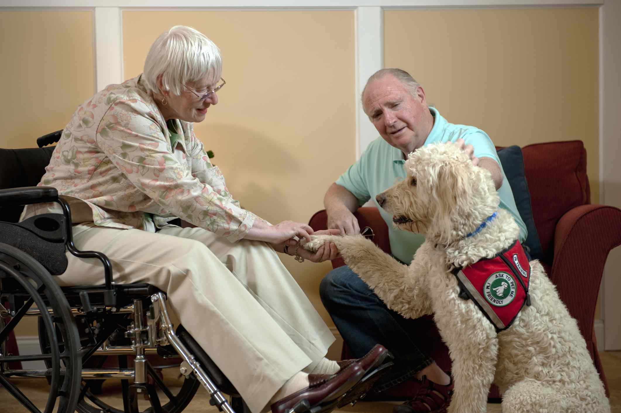 Blonde goldendoodle with senior citizens