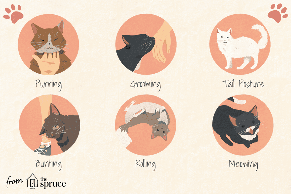 how cats show love illustration