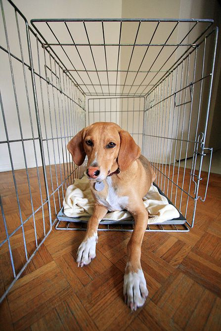 Cachorro en jaula - Foto de perro en perrera