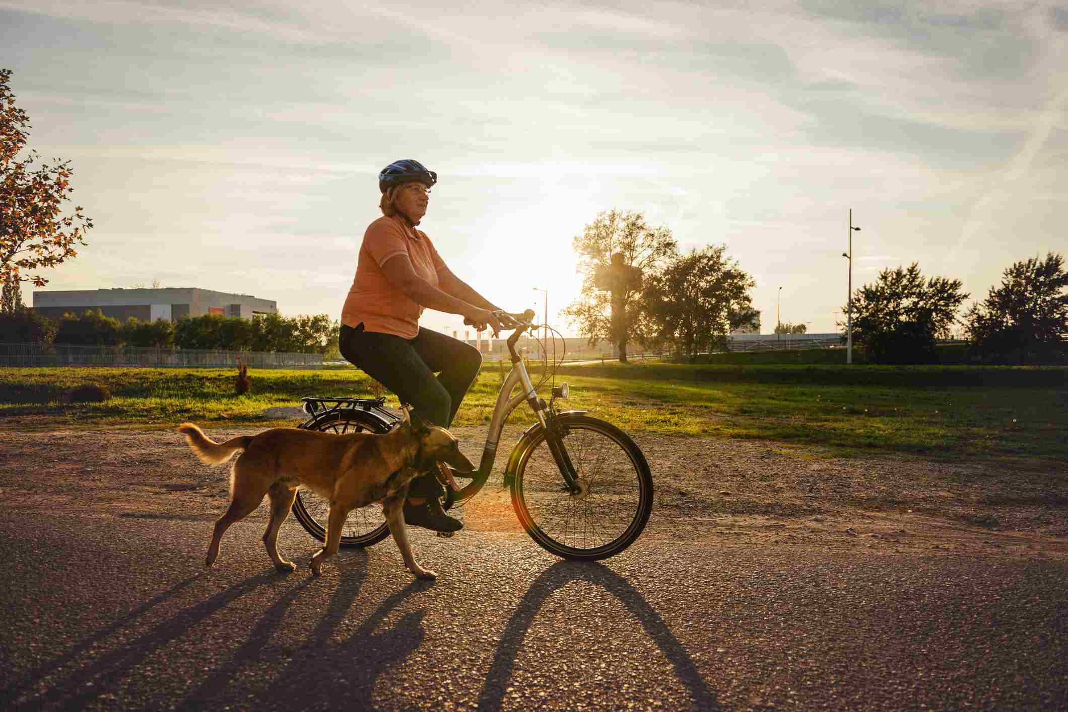 add_a_photo Buy the print Comp Save to Board Senior woman riding bicycle and walking Belgian Malinois dog