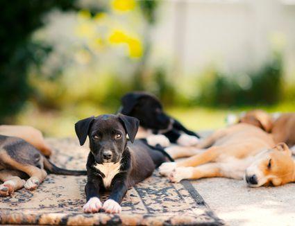 Watch How to Prevent Canine Coronavirus video